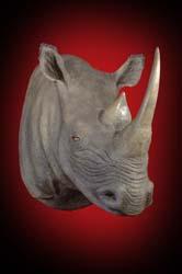 Rhino Black Shoulder Mount - Fibre Glass Replica 1